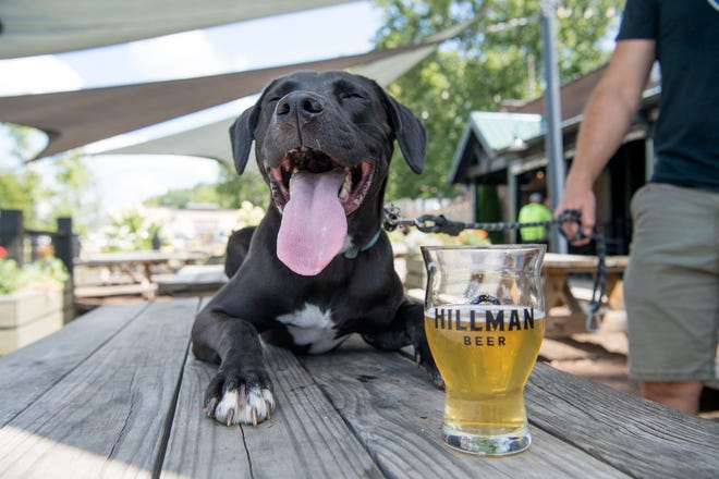 The passing of Senate Bill 290 now allows pets inside breweries in North Carolina. Hillman Beer co-owner Brad Hillman's dog, Roland, poses at the brewery on Aug. 16, 2019. Dogs are not normally allowed on tables at the brewery.