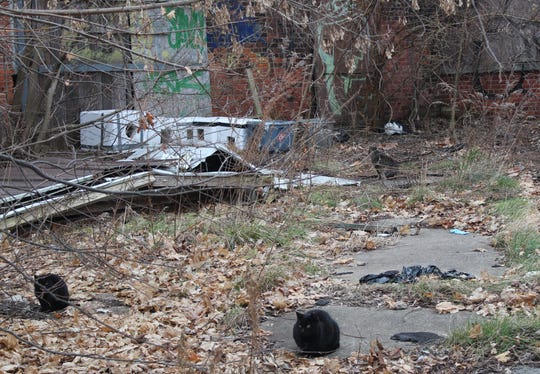 Feral cats live at the Union Steel building in Albion. The structure is to be demolished in the spring.
