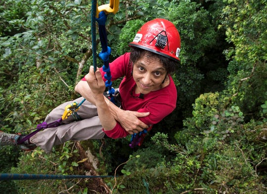 In this 2014 photo provided by Sybil Gotsch shows ecologist Nalini Nadkarni studying the rainforest canopy in the Monteverde region of Costa Rica.
