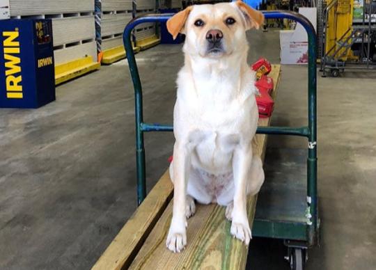 Bella was taken when a South Carolina man's truck was stolen from outside a store.