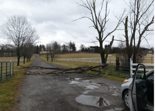 High winds blew down trees and limbs Monday at Raemelton Therapeutic Equestrian Center on South Trimble Road.