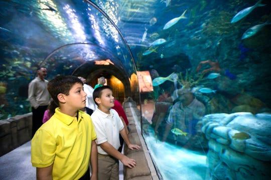 The Audubon Aquarium lets kids get up close to the fish.