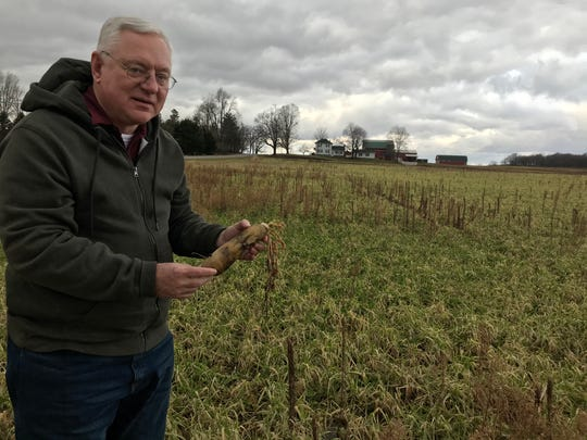 Rick Jones, former state senator from Grand Ledge, talks about daikon radishes at an Oneida Township farm field. Jones said planting them is a good farm practice but the warm December weather caused a funky smell.
