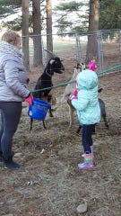 Toby the goat was stolen from The Phoenyx Farm and Sanctuary on Dec. 29, 2019, his human caretaker said. Toby is a therapy animal and friend to a number of underprivileged and disabled children.