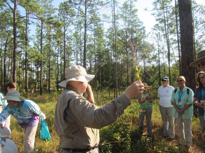 Dr. Loran Anderson teaching about skeletongrass (Gymnopogon ambiguous) during a Master Naturalist class field trip.