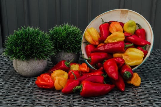 """Fresh ingredients such as these give Two Birds Hot Sauce its """"happy heat."""" June 4, 2019."""