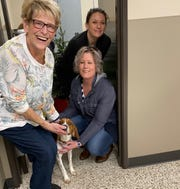 Animal Resource Funding Foundation board member Weslie Modolo, left, and vice president Wendy Doute, right, make friends with Rubin, a 5-year-old beagle. Standing at right is Jessica Paulovich, a veterinary technician at Woodhaven Animal Hospital.Photo by Patricia Odette