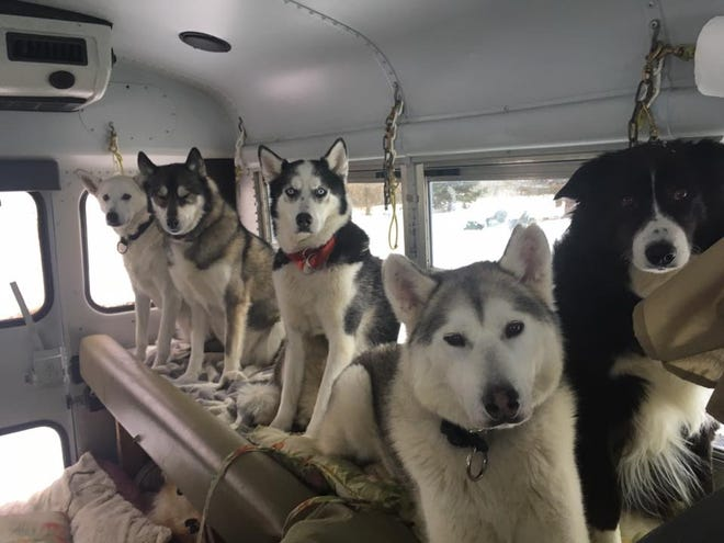 The Door County Sled Dogs will be visiting the Milwaukee Public Museum during Snow Day on Jan. 11.
