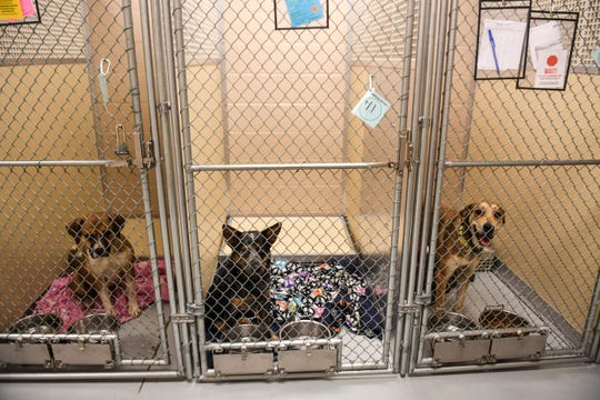 Dogs wait to be adopted on Friday, Jan. 3, 2020 at the Sioux Falls Area Humane Society. Bella was the most popular dog name of 2019.