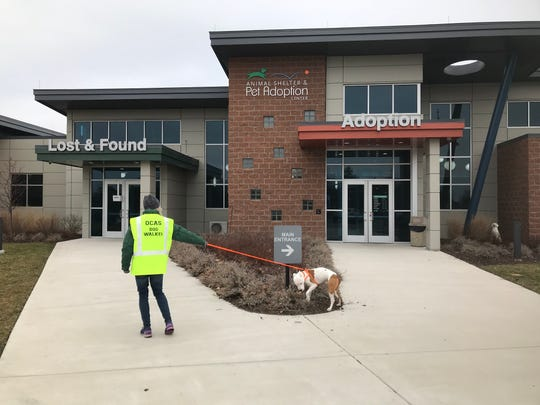 A volunteer walks a dog outside the Oakland County Animal Shelter in Pontiac on Jan. 3, 2020.
