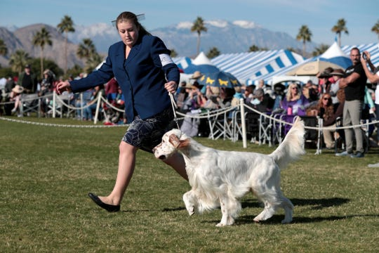 The Kennel Club of Palm Springs host the largest dog show on the West Coast at the Empire Polo Club in Indio, Calif., on Saturday, January 4, 2020. Over 3,000 dogs were entered in the Saturday show.