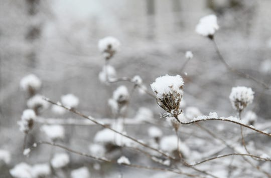 Sunday's snow clings to dried plants in Detroit.