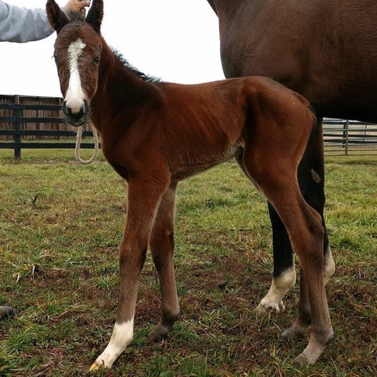 Justify's first foal was born Jan. 3, 2020, to mare Foreign Affair.