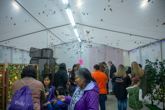 Butterflies are free to fly, visit and eat in the Folk's Butterfly Farm tent at the Pennsylvania Farm Show on Saturday, Jan. 4, 2020.