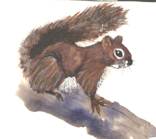 "Red squirrel (""boomer"")"