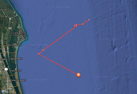 The recent 24-hour tracking of Brunswick, the white shark off Brevard County.