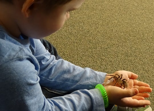 Kameron Cochran, 4, holds a Chaco gold knee spider during Nature Story Time earlier this year at Lowe-Volk Nature Center. The center will be closed through April 12.