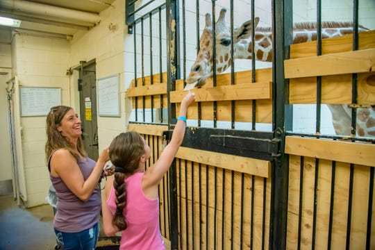 Visitors can feed giraffes during a behind-the-scenes tour at the Milwaukee County Zoo.