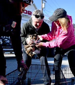 From left, West York Police Officer Bree Wilson, West York Public Safety Chief Matt Millsaps and Borough Animal Response Krew (BARk) representative Shelley Metzler cage a cat taken from a house on Monroe Street in the borough after a fire occurred there Monday, Jan. 6, 2020. Bill Kalina photo