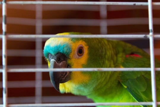 "When someone in a Florida neighborhood heard what sounded like a woman screaming for help, the person called 911. The voice was actually coming from a parrot saying, ""let me out!"""