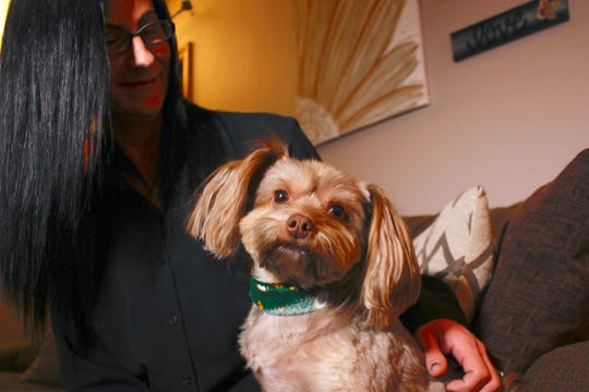 Amy Carter looks at her Yorkshire terrier-Chihuahua mix Bentley, who has epilepsy in St. Francis, Wis. Carter gives him CBD, which she says has reduced his seizures.