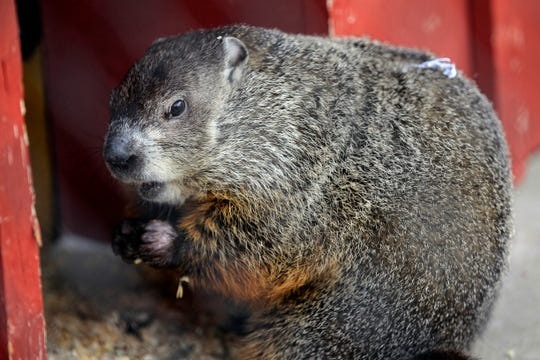On Feb. 2, 2013, the Milwaukee County Zoo's groundhog Wynter did not see her shadow. When a blizzard hit Wisconsin two years earlier on Groundhog Day, the rodent wisely stayed inside.