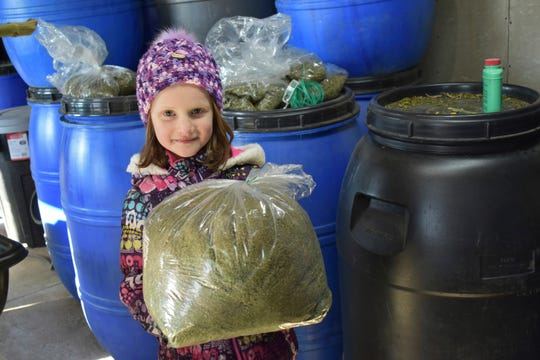 In this Dec. 21, 2019, photo, Addison Aberle holds some finely ground hemp plant in Beloit, Wis. CBD oil will be extracted from it.
