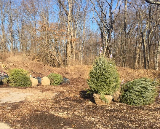 Blue spruce and white pine trees were stolen from Landen-Deerfield Park, according to the Warren County Park District.
