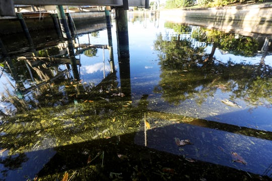 A small patch of blue green algae floats in a canal in the Fort Myers Shores neighborhood on Wenesday Jan. 8, 2020.