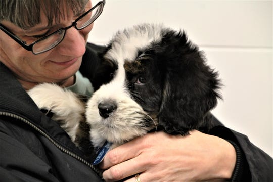 Marion Police Department K9 Chip, a Bernedoodle puppy, enjoys a snuggle on Tuesday after being introduced to the crowd at a Pleasant High School boys basketball game.