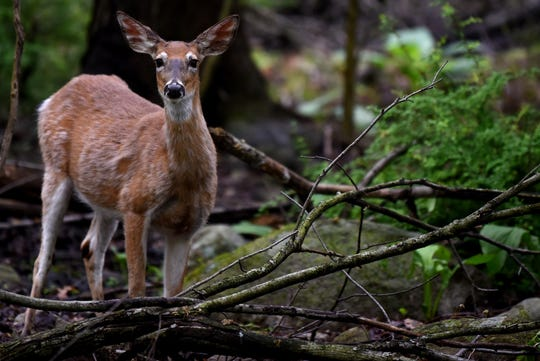 The 2020 Essex County Deer Management Program in Essex County has been announced.