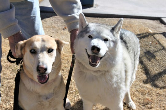 Gracie the blind dog, left, stands with her new brother, Lakota, right, at Pioneer Women's Park in Las Cruces.