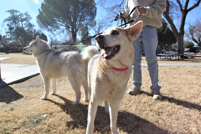Gracie enjoys her day in the sun at Pioneer Women's Park with her brother, Lakota, Tuesday, Jan. 7.