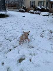 Jasmine is 10 years old but the snow in Stuarts Draft on Jan. 7, 2020, made her play like a puppy.