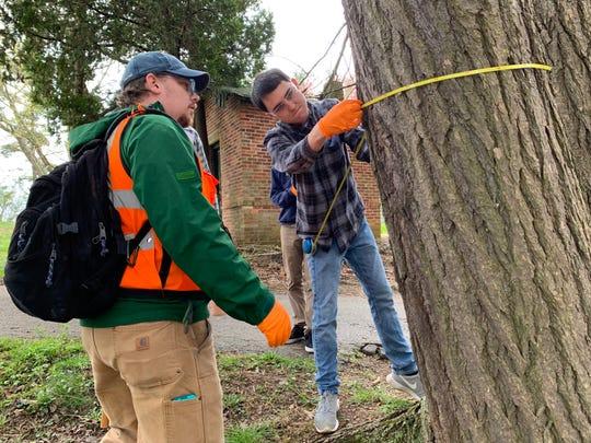 Workshop participants measure a hemlock tree diameter.