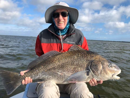 This giant black drum was caught by a client of Capt. Jon Lulay's prior to the wind blowing 20 knots for five straight days as it has this week.
