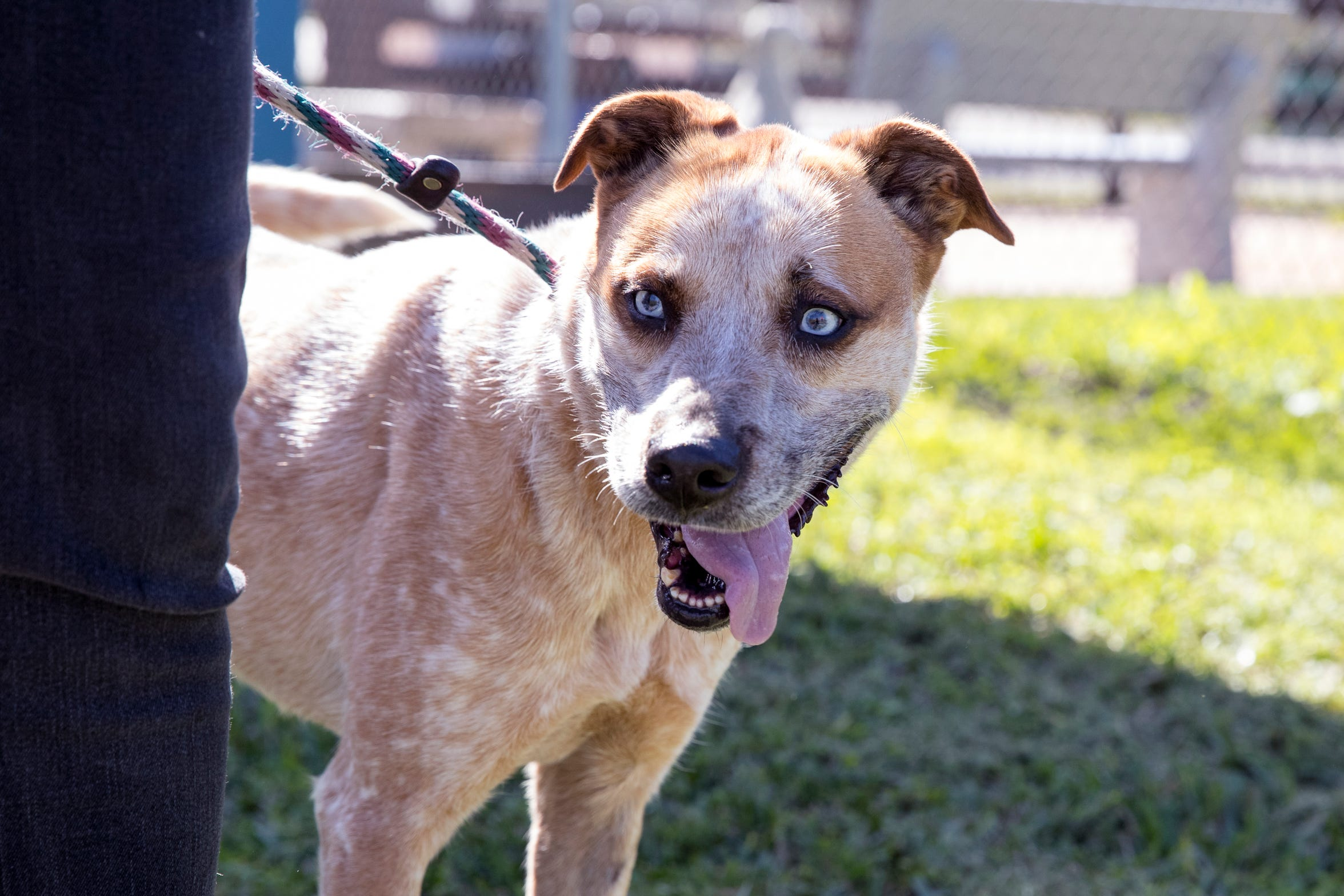 Sky is one of several dogs at the Gulf Coast Humane Society that loves kids. She is six years old, has been at the shelter for five years and likes to cuddle.