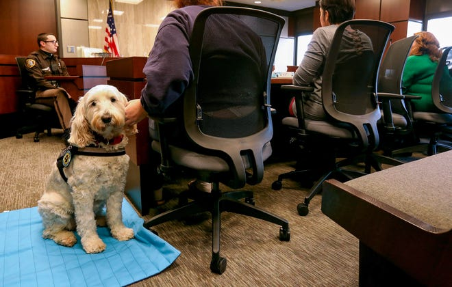 Izzy, a comfort dog, sits next to 16-year-old Marley, during a hearing in Macomb County Juvenile Court in downtown Mt. Clemens on December 29. Izzy is often seen in juvenile court hearings as a stress relief for youth facing attorney referees in various kinds of proceedings.