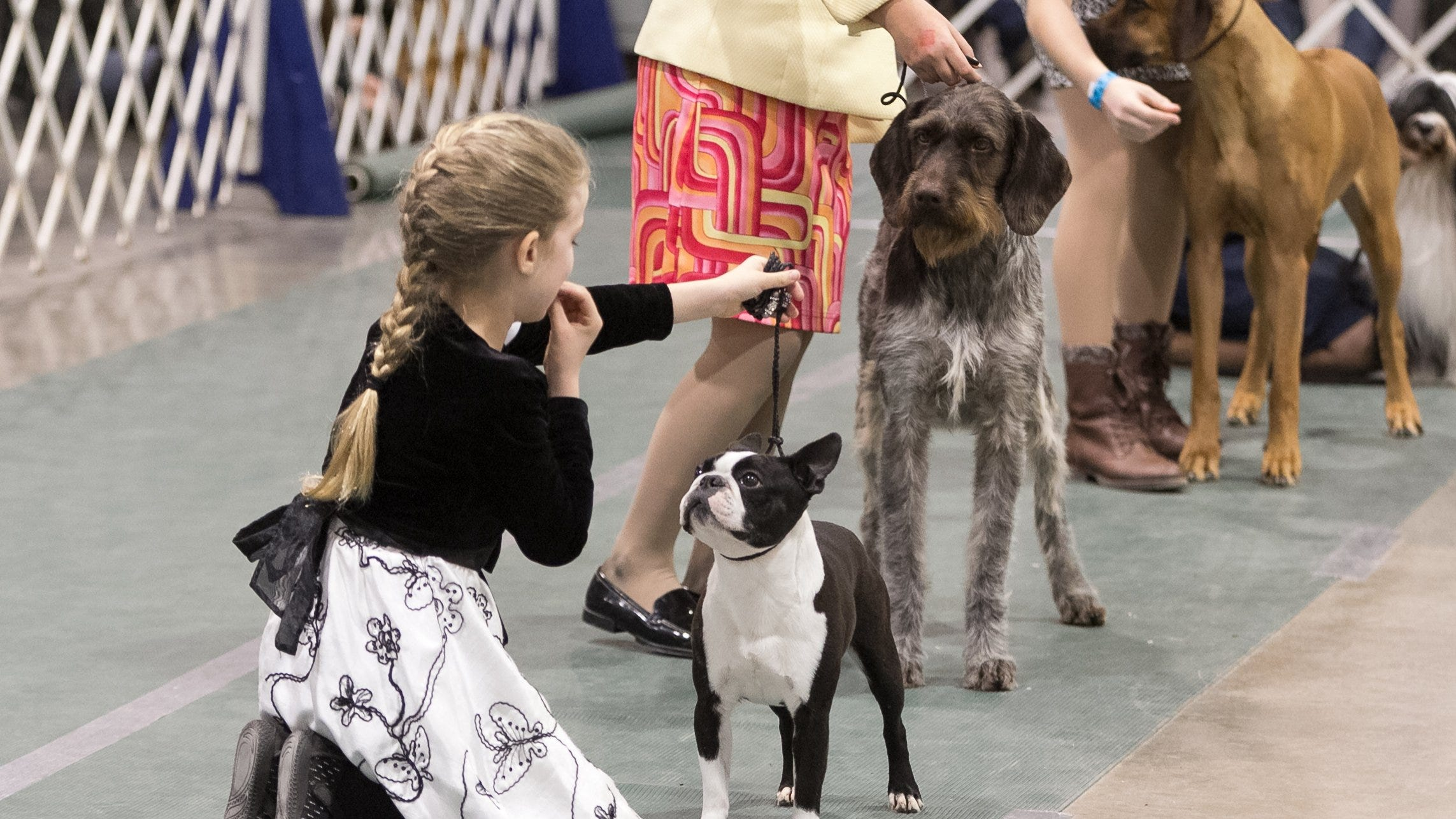 Detroit's Top 10: Cool things to do this weekend, including Novi dog show, Hip Hop Smackdown, Detroit Boat Show