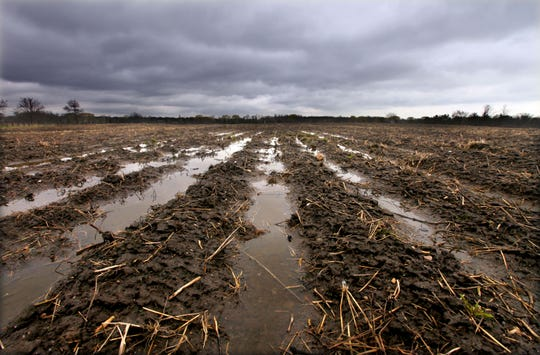 A very muddy corn field in southeast Wisconsin symbolizes some of the stress corn growers are under as COVID-19 decimates the agricultural economy.