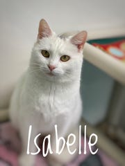 Isabelle is a 3-year-old spayed female who will take your breath away at once glance of her beauty.