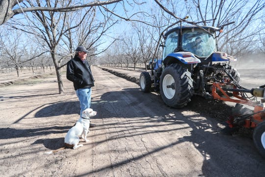 Louie Salopek watches pecans being harvested with his dog Jaxxon at Five Friends Farms in Las Cruces on Friday, Jan. 3, 2020.