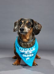 Wendy is an 11-year-old Dachshund is competing alongside dozens of other dogs from animal shelters across the U.S.