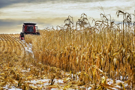 A farmer harvests corn on a field near St. Joseph in this file photo taken in the fall of 2017.