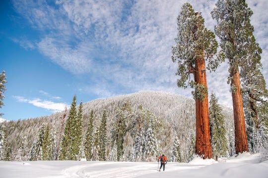 Snow on the ground at Alder Creek creates an otherworldly landscape.