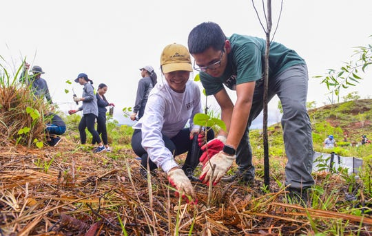 University of Guam Green Army members Nolan Flores, right, and Aria Palaganas, lay mulch around a pago tree sapling as they and other volunteers plant trees in the Ugum watershed area of Malojloj on Saturday, Jan. 11, 2020. The project, organized by the University of Guam Sea Grant Program, aimed to have planted about 2000 pandanus, pago and other trees in hopes to reduce or prevent soil erosion into the rivers and eventually the oceans, said Sea Grant graduate student, CJ Paulino.