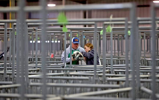 Randy and Addison Dupre get a lamb ready to show during the Tom Green County Jr. Livestock Show at the San Angelo Fairgrounds on Saturday, Jan. 11, 2020.