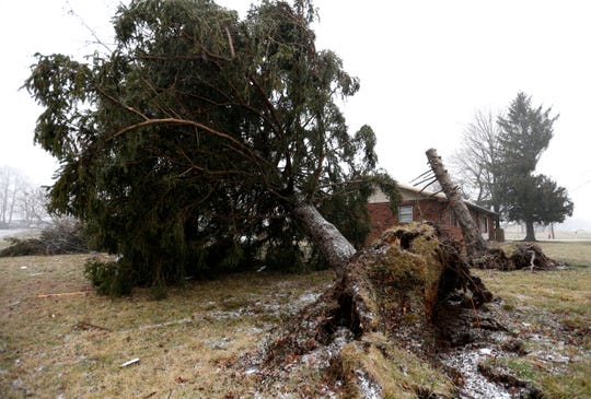 A large tree that was uprooted is seen Saturday in Strafford.