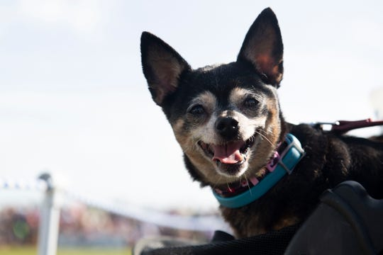 """Thousands of people and their dogs attend the seventh annual Bark in the Park on Saturday, Jan. 11, 2020, at Riverside Park in Vero Beach.  """"For anyone who loves dogs, this is the place to be,"""" said Humane Society executive director Kate Meghji."""