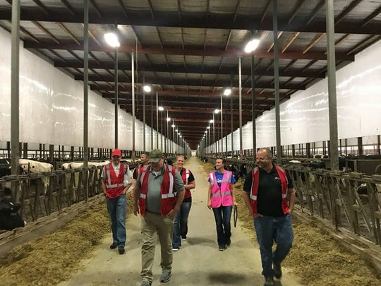 Cayley Vand Berg leads a tour group through one of the massive freestall barns at Rosendale Dairy.